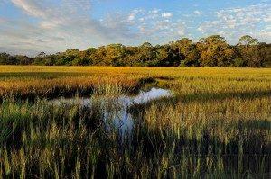 Marshes-of-Glynn-Jekyll-Island-Ga-002-1024x682-300x199