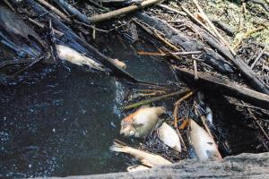 FIVE YEARS AFTER FISH KILL, OGEECHEE RIVERKEEPER'S WORK HAS RESTORED WATERWAY