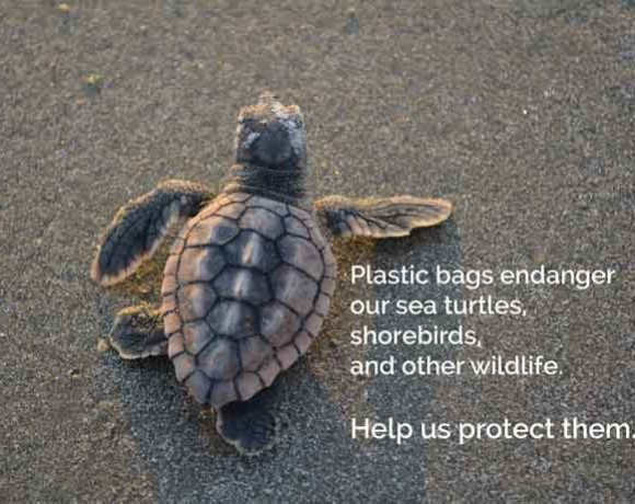 Campaign to Support Tybee Island Bag Ban