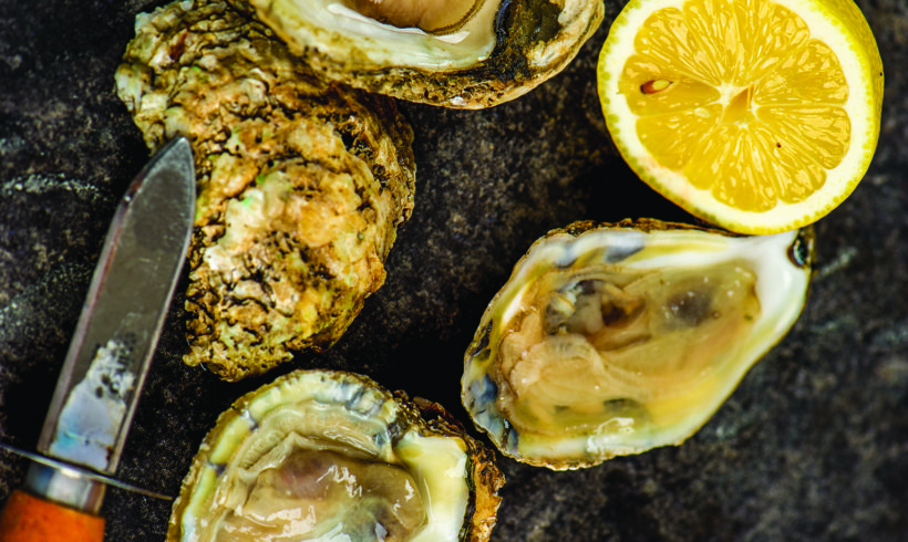 OGEECHEE RIVERKEEPER ANNOUNCES ANNUAL OYSTER ROAST WITH FISH TALES AT FORT MCALLISTER MARINA