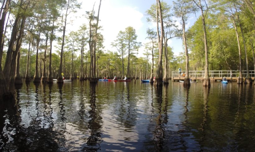 OGEECHEE RIVERKEEPER SEEKING  NEW RIVERKEEPER EXECUTIVE DIRECTOR